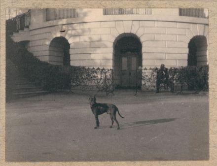 TR's dog Jack