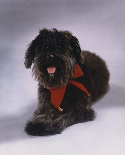 official_portrait_of_lucky_the_dog